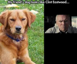 clint eastwood funny picture