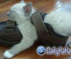 Cat sleeping in a shoe