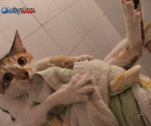 Confused Cat Bath