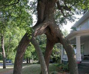 Tree Walkway funny picture