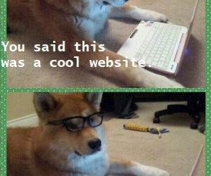Cool Website funny picture