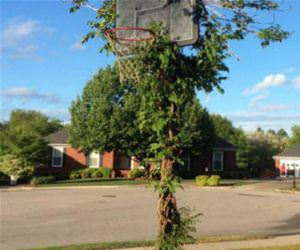 cool basketball hoop funny picture