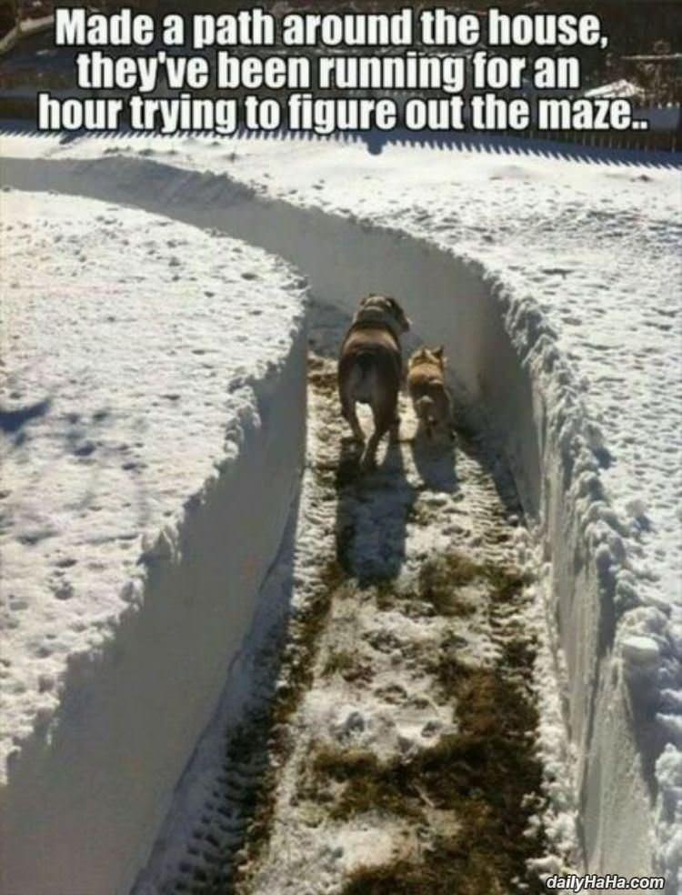 funny dogs in snow meme