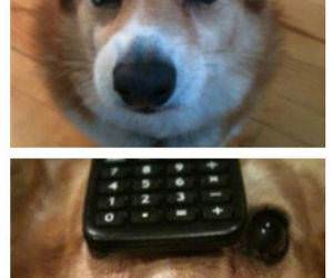 Corgi Hat Hacker funny picture