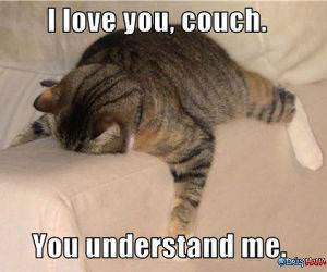 Couch Cat funny picture