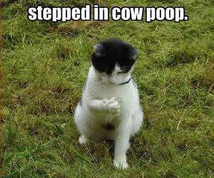 Cow Poop funny picture
