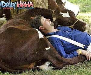 cow bed