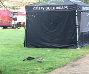 crispy duck wraps funny picture