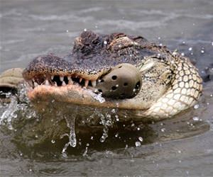 crocs funny picture