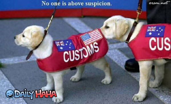 Customs Dogs