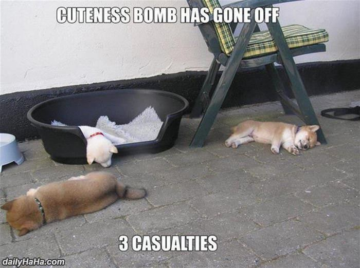 cuteness bomb has gone off funny picture