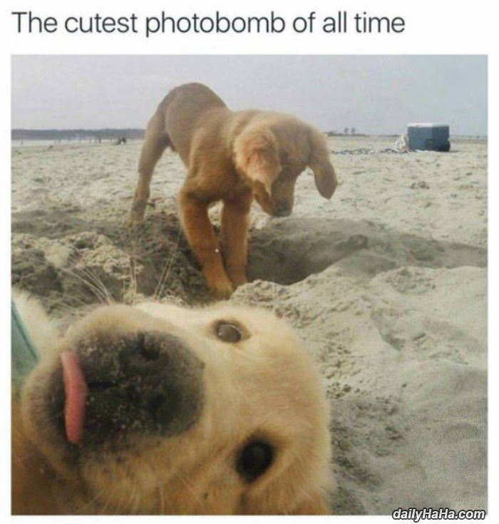 cutest photobomb funny picture