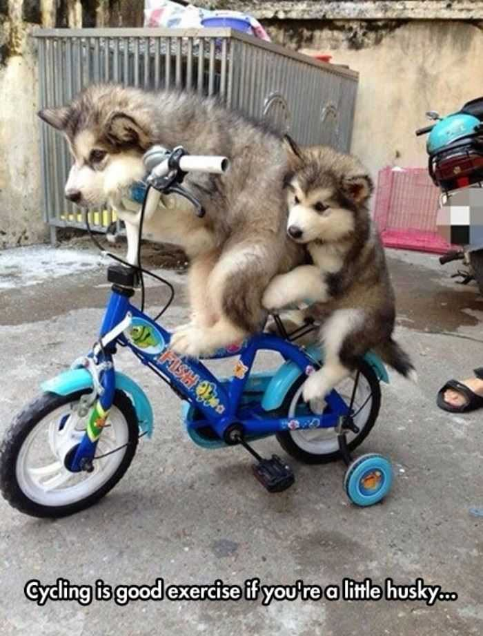 cycling is good exercise funny picture