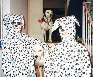 dalmations funny picture