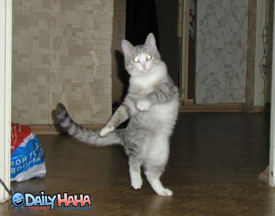 Dancing Cat Pose