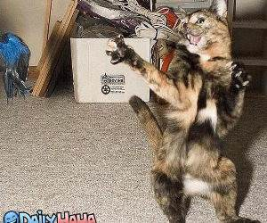 Dancing Cat Picture