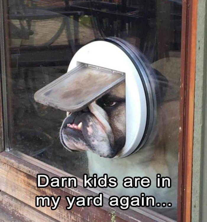darn kids funny picture