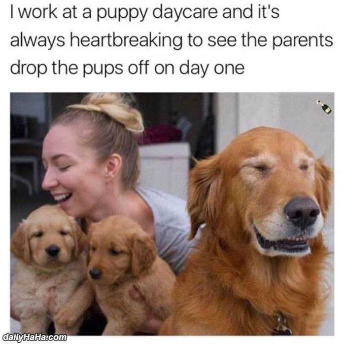 day 1 of puppy daycare funny picture