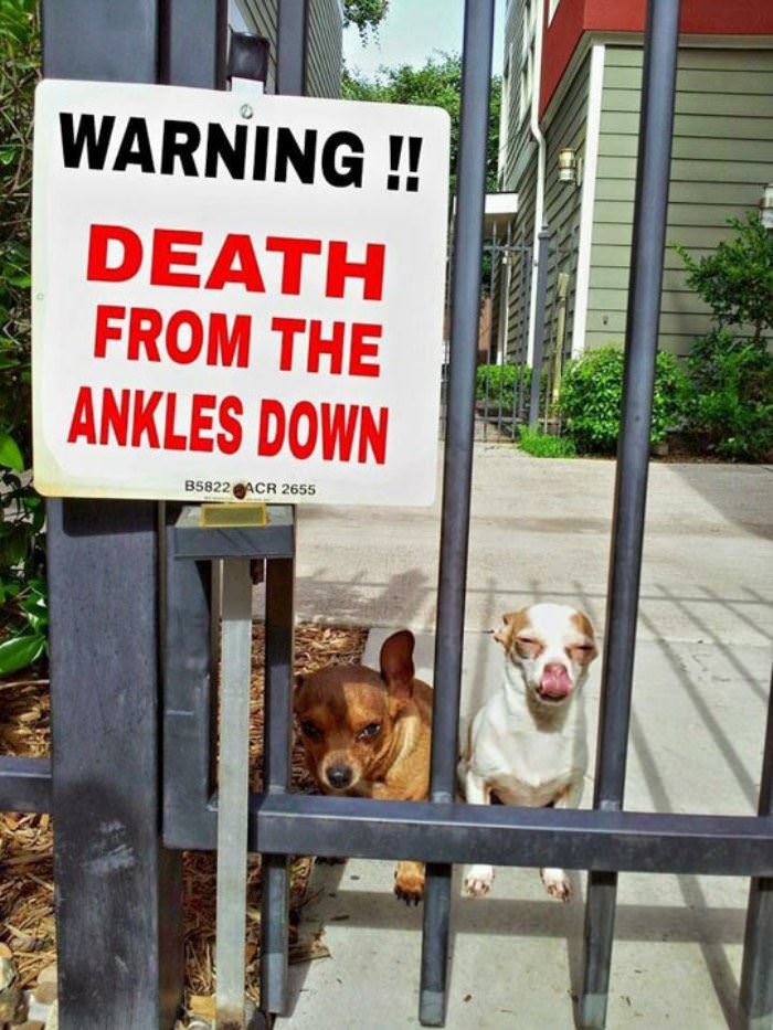 death from the ankles down funny picture