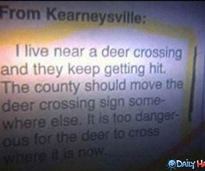 Deer Crossing funny picture