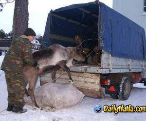 Deer Humper