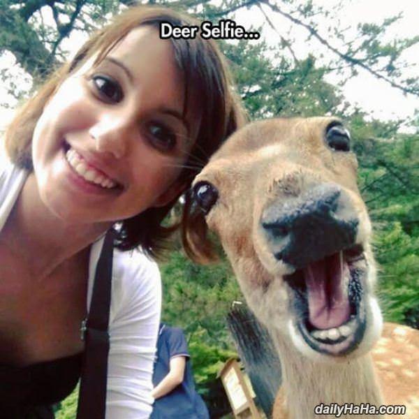 Deer Selfie Funny Picture