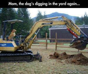 digging in the yard funny picture