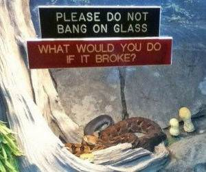 Do not Bang On Glass funny picture