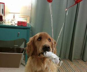 Do Not Trust Balloons funny picture