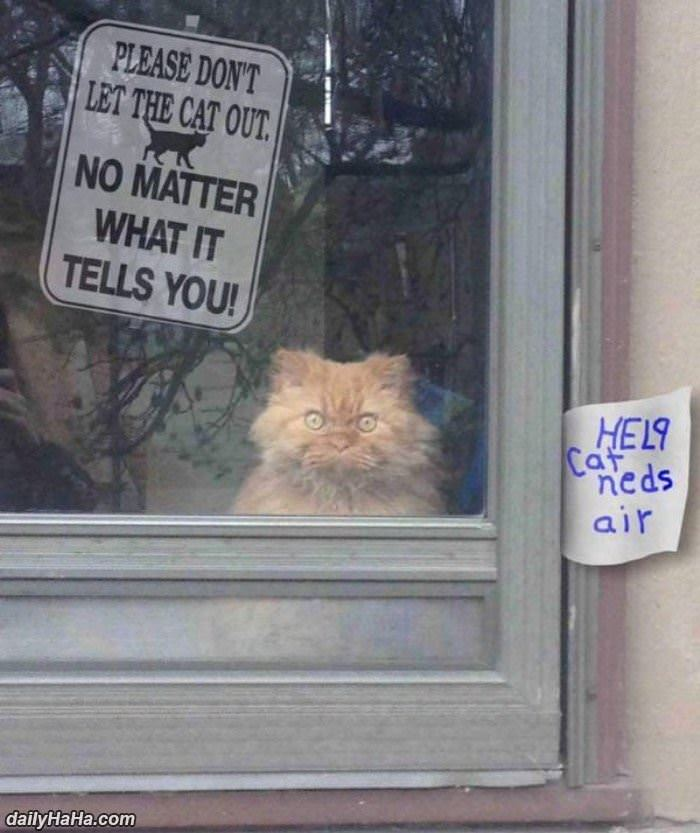 do not let the cat out funny picture
