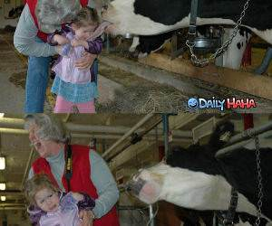 Do Not Want Cow funny picture