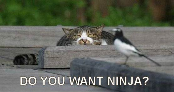 http://www.dailyhaha.com/_pics/do_you_want_ninja.jpg