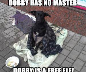 Dobby funny picture