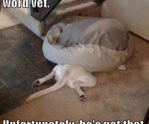 Dog Hates the Vet funny picture