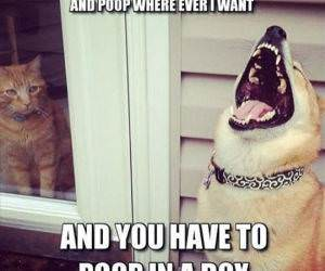 Dog Humor funny picture