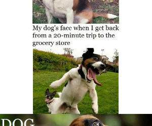 Dog Logic funny picture