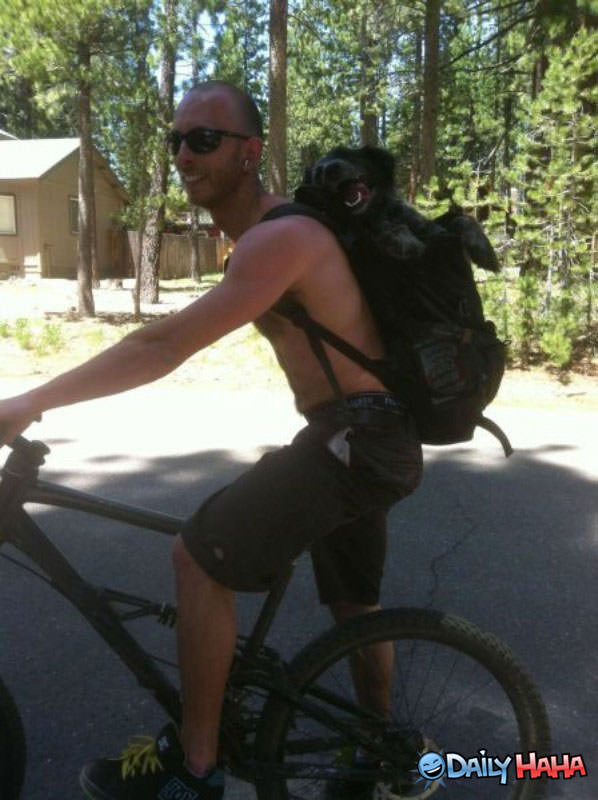 Dog Rides Bike funny picture