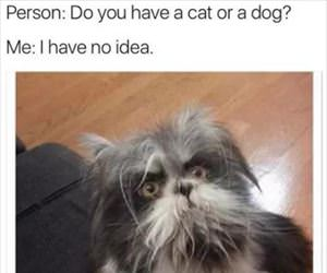 dog or a cat