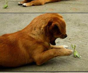 Dog vs Mantis funny picture