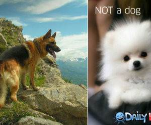Dog vs Not a Dog funny picture