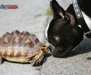 Dog Vs Turtle