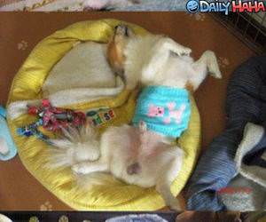 Lazy Dogs Funny Picture