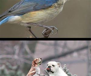 dog birds funny picture
