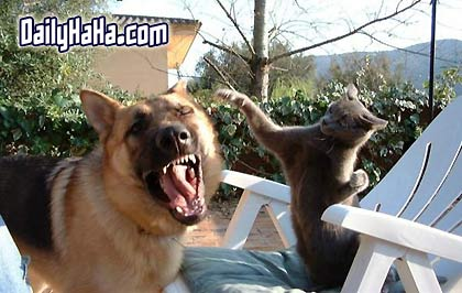 Dog and Cat Fighting