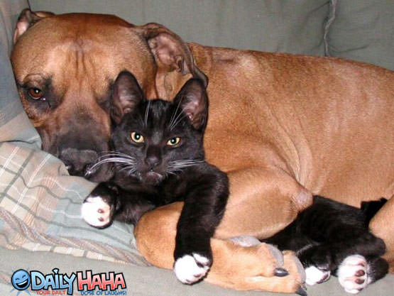 Dog Hugging Cat Picture