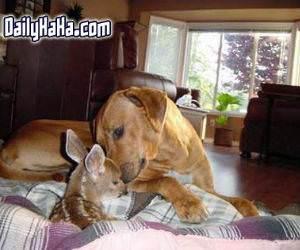 Dog kissing a deer