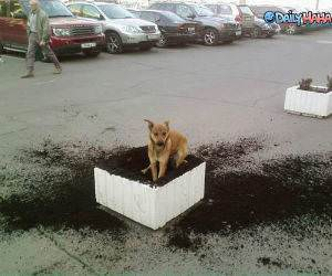 Dog Digging Dirt