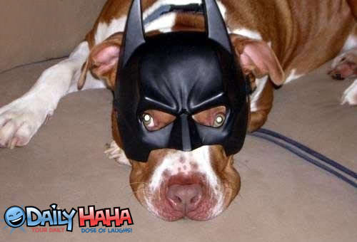Bat Dog
