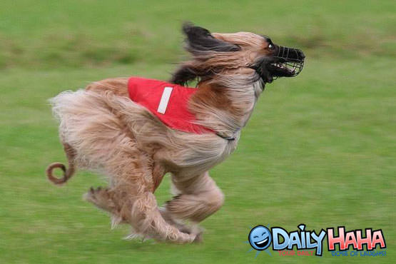Muzzle Dog Running Picture