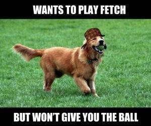 dog wants to play fetch funny picture